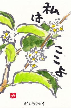 Ginmokusei