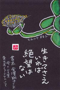 Mayuhakeomoto2